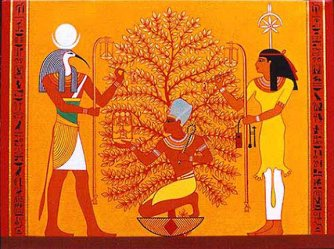 Egyptian acacia