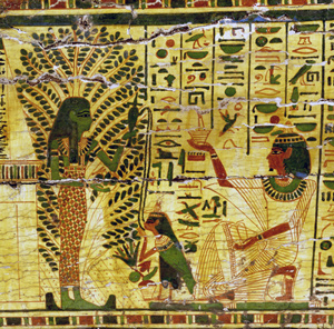 egyptians and acacia